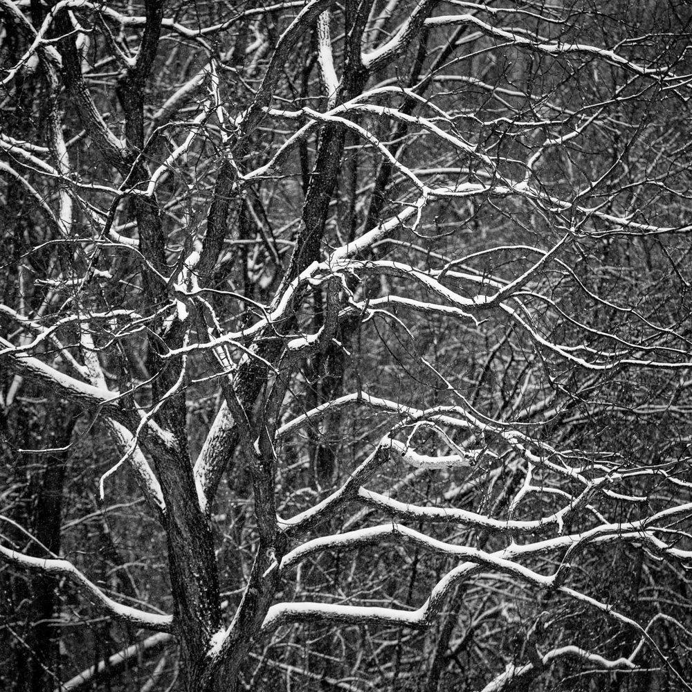 Mauzy-Tree-10.jpg
