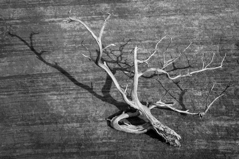 Mauzy-Tree-11.jpg