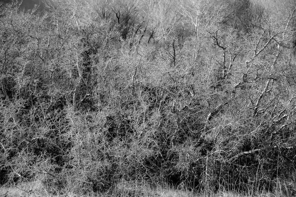 Mauzy-Tree-13.jpg
