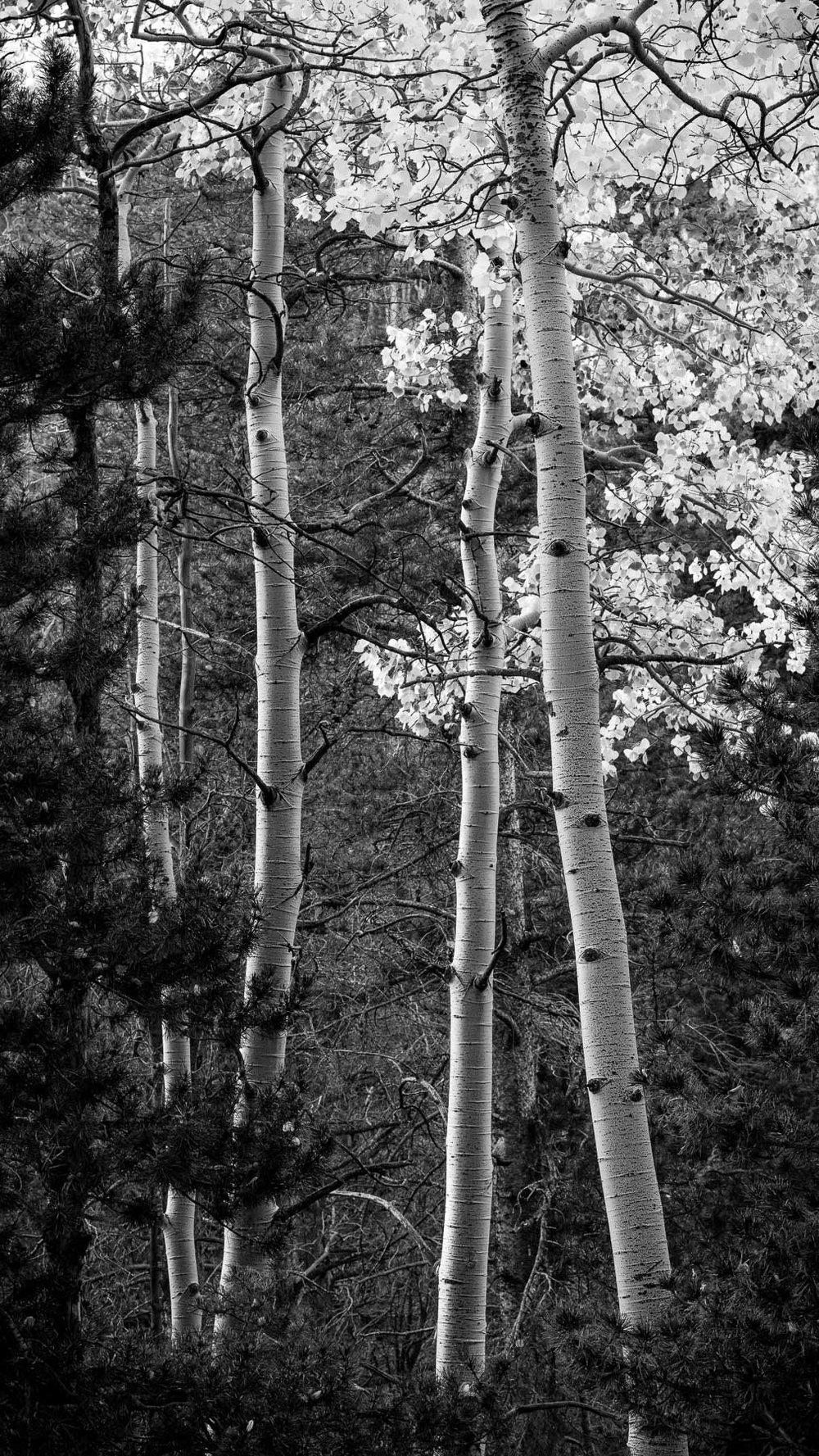 Mauzy-Tree-15.jpg