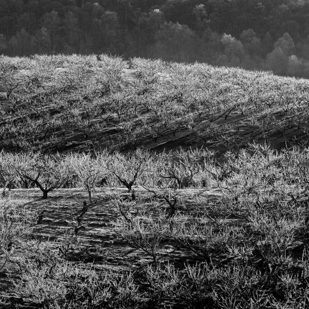 Mauzy-Tree-14.jpg