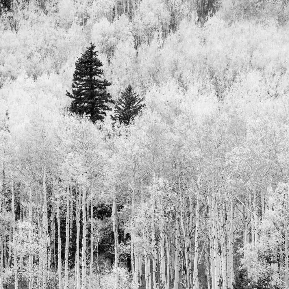 Mauzy-Tree-17.jpg