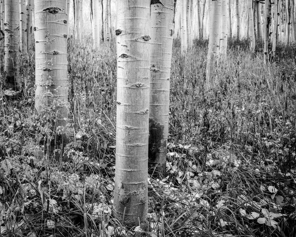 Mauzy-Tree-21.jpg