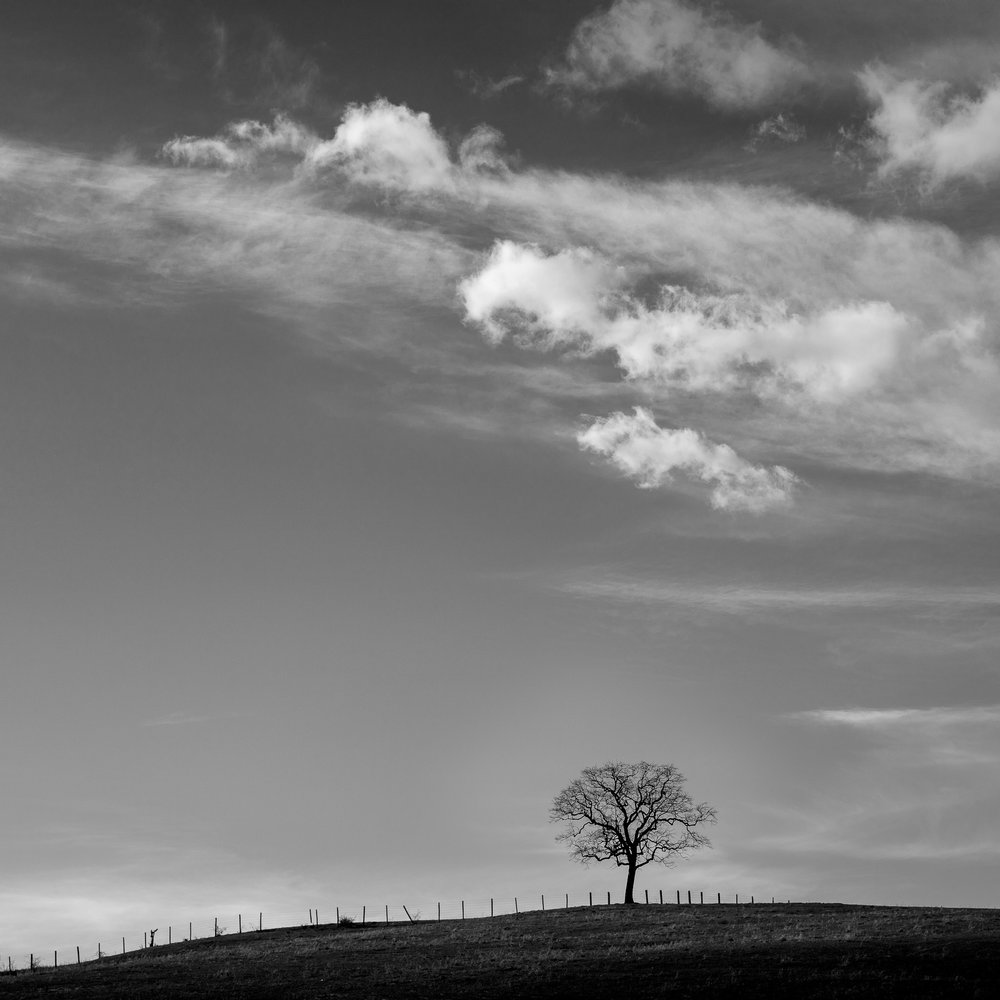 Mauzy-Tree-22.jpg