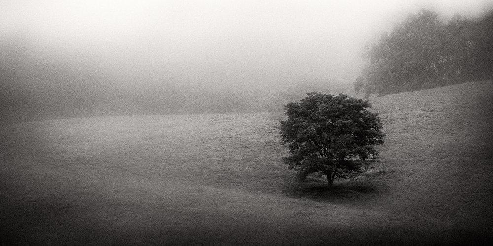 Mauzy-Tree-24.jpg