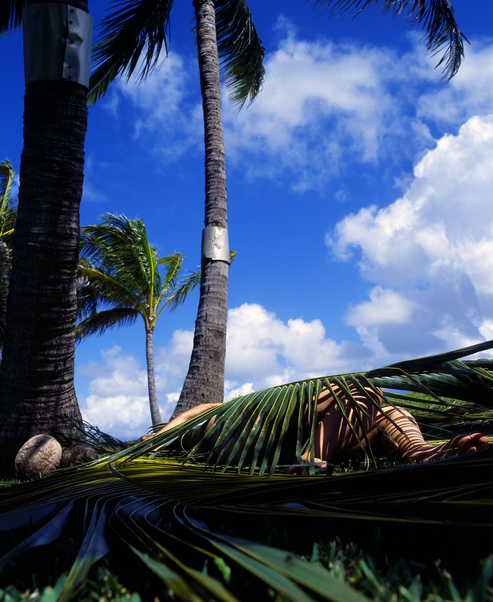 Palm Fronds at Coconut Grove / Palama Kapa (Palm Frond Covering)