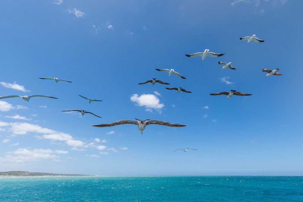 Soaring with the Gulls