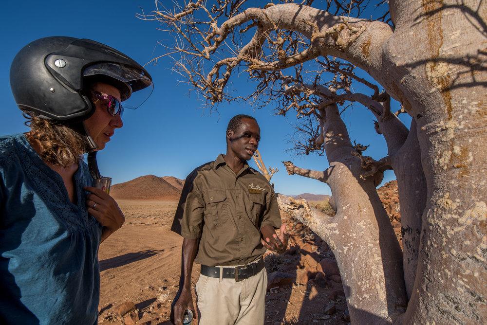 African Moringa