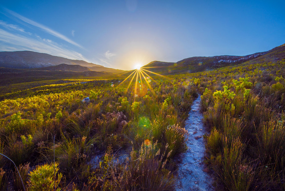 The fynbos, near Botrivier, South Africa