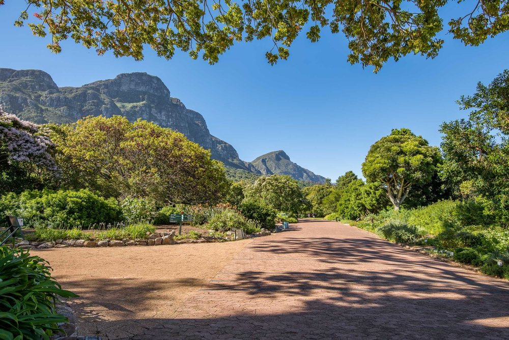 Kirstenbosch Botanical Gardens sit on the flanks of Table Mountain, Cape Town, South Africa.
