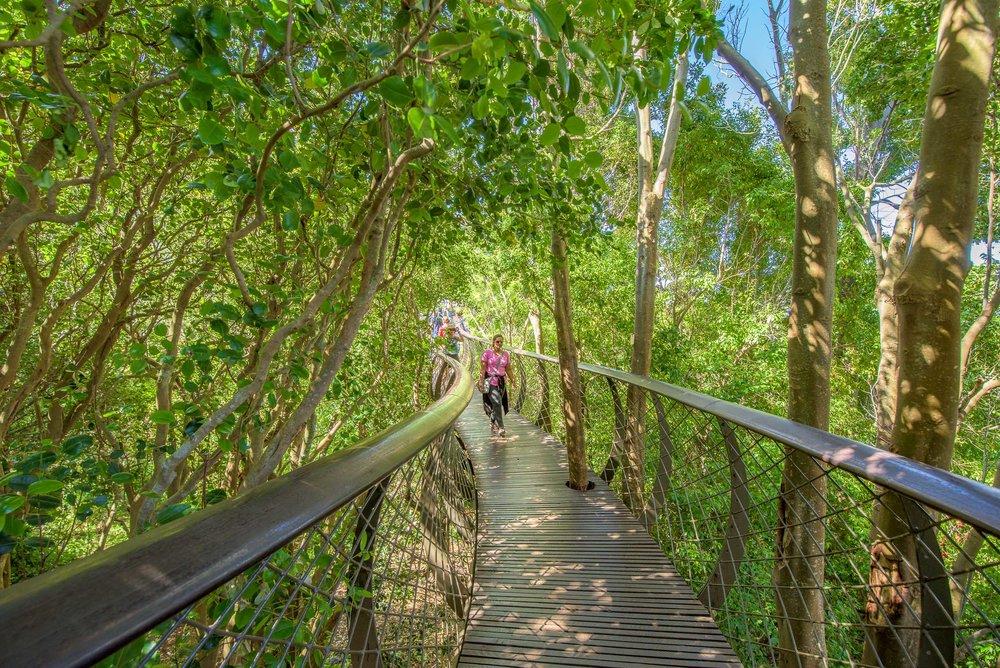 Tree Canopy Walkway