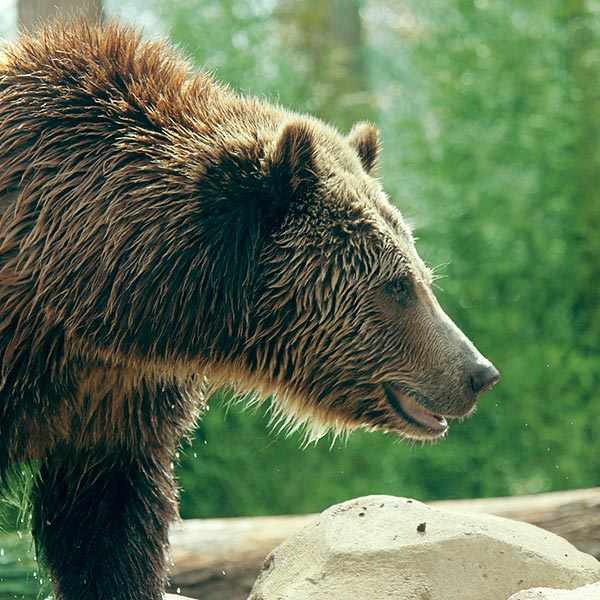 blog_bearspray_feat_v1.jpg