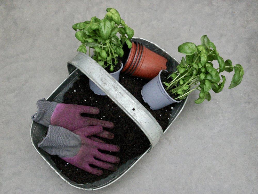 Supermarket basil - ingredients