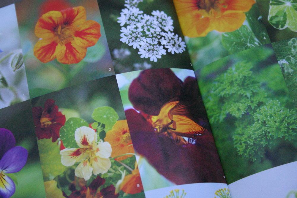 cottage garden annuals