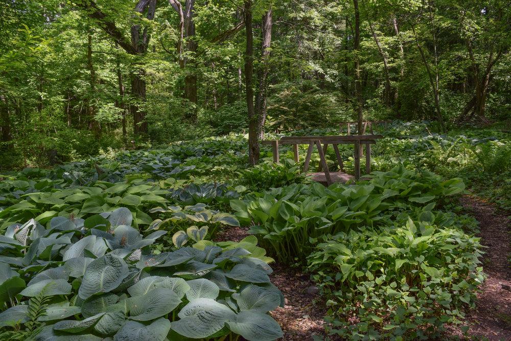 Brincka Hosta Garden