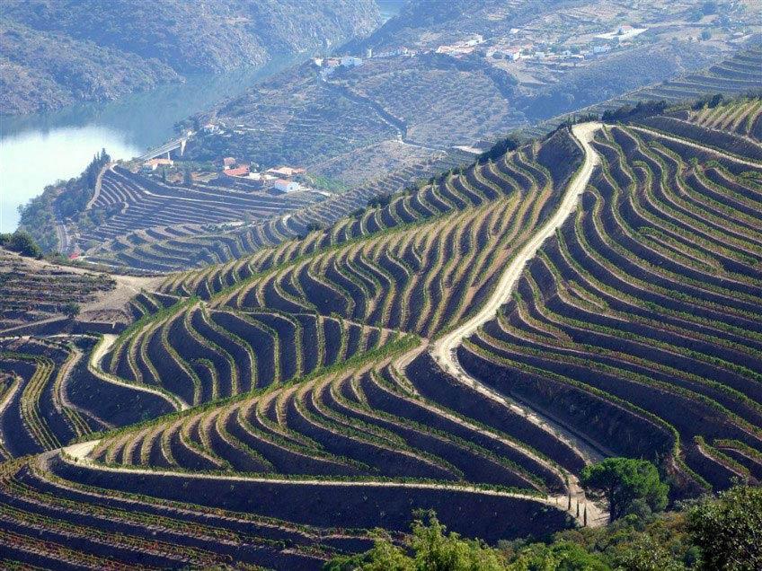 Copy of Douro vineyards