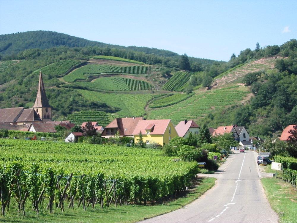 Alsace vineyards_3.jpg