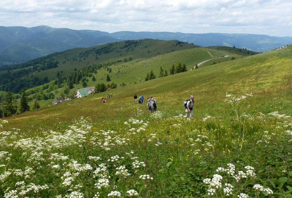 Vosges.jpg