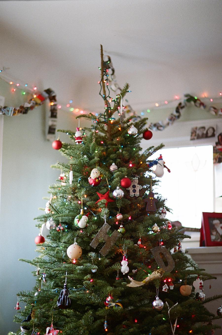 sandra coan color film photography christmas tree