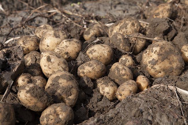 farming_inset.jpg