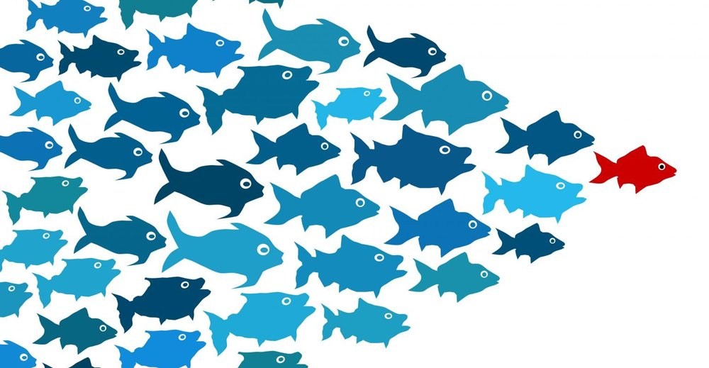 Fishes lead by a red fish.jpg