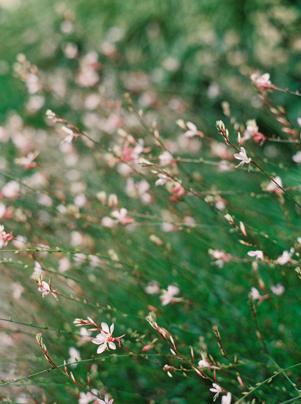 jenna mcelroy photography-16.jpg