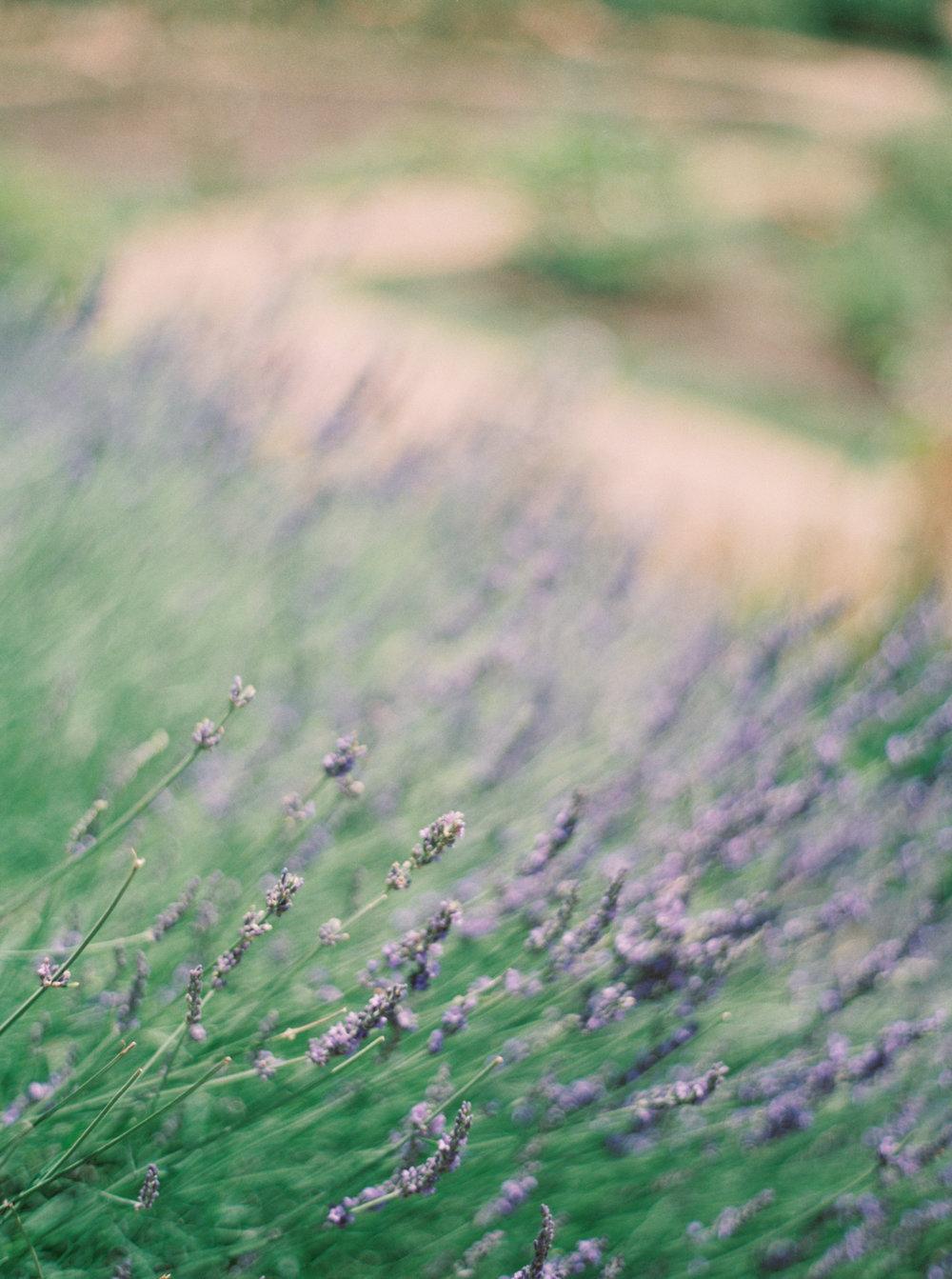jenna mcelroy photography-25.jpg