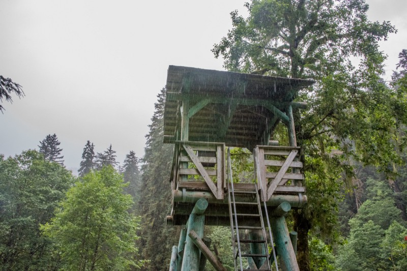 Pack Creek Observation Tower