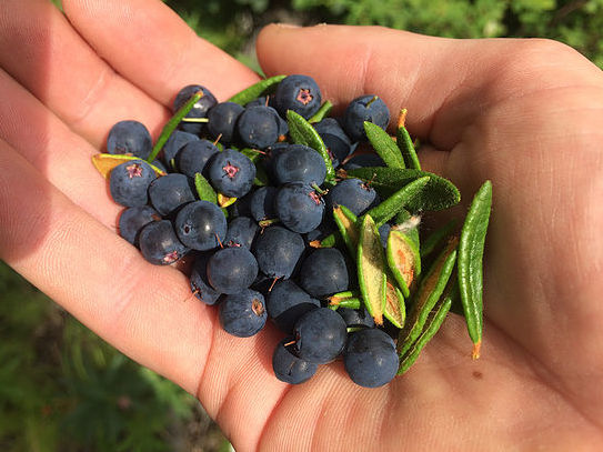 Local, hand-picked blueberries