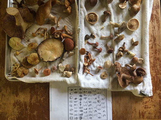 Local, hand-foraged mushrooms