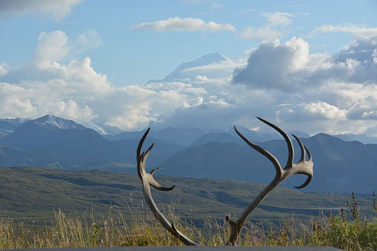 Denali, encircled in clouds—and framed by the antlers of a caribou