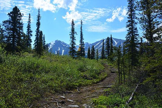 Hiking trails…in my backyard