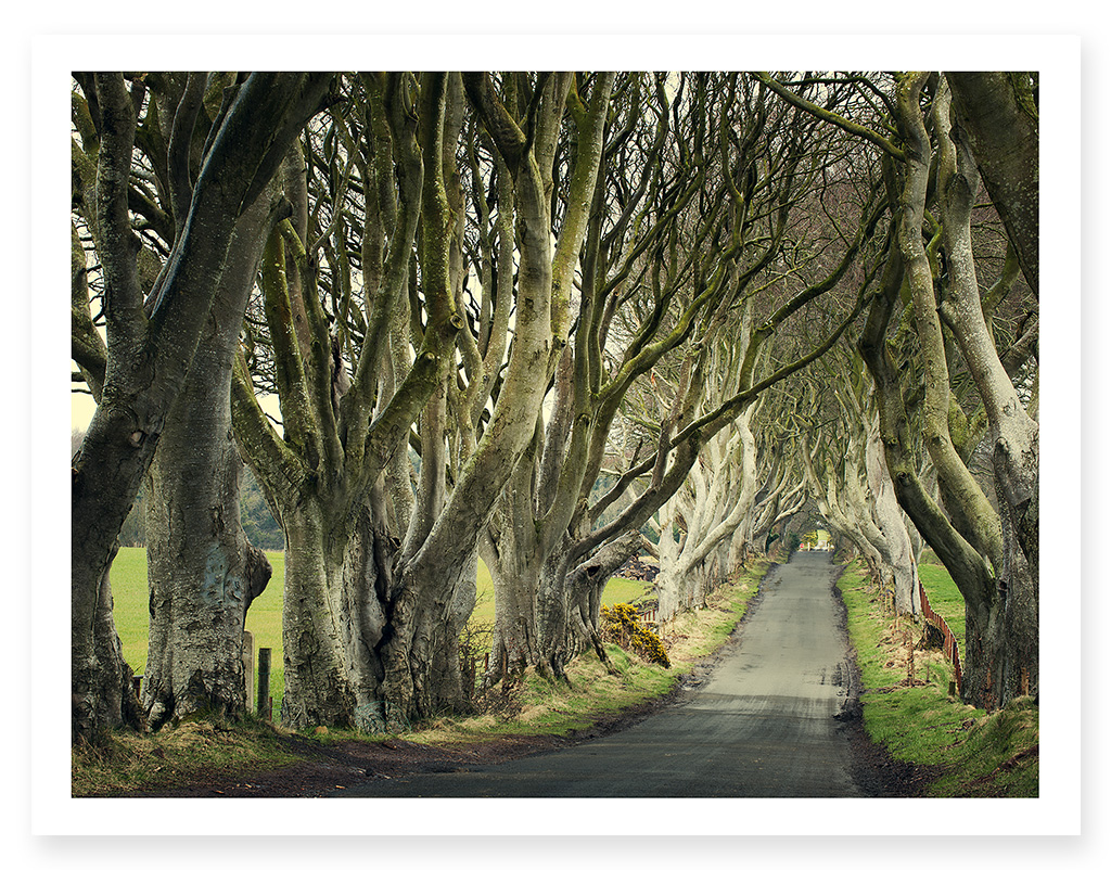 easton_dark_hedges_01