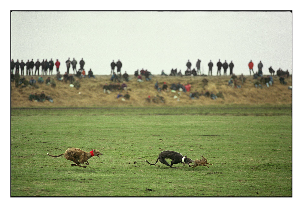Waterloo Cup, Hare Coursing, 1994