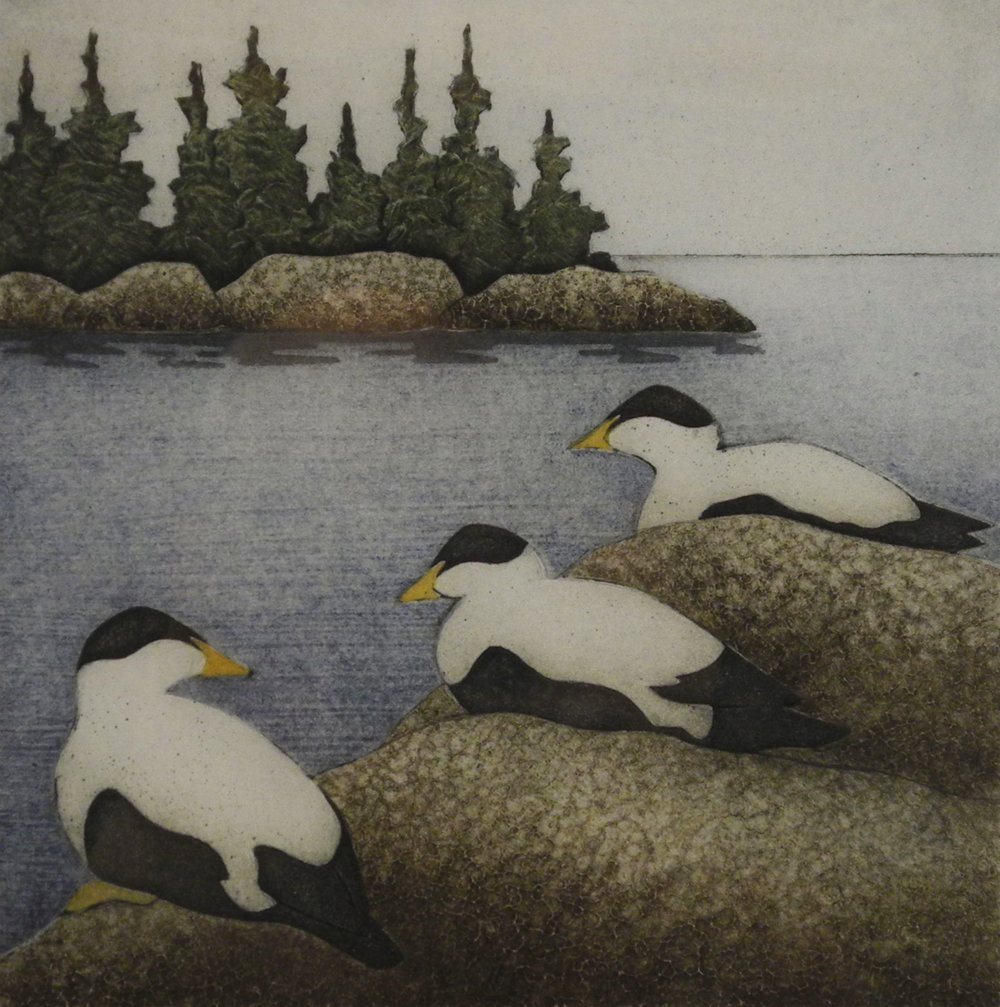 Three Eiders
