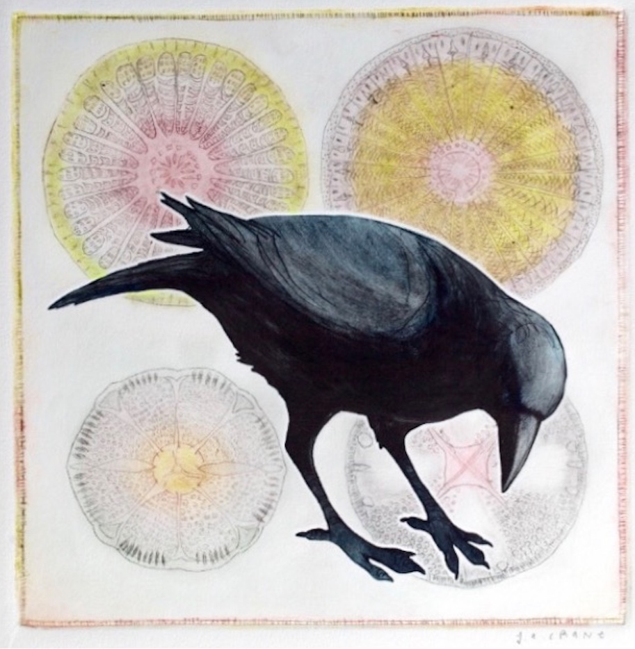 Crow amid Diatoms