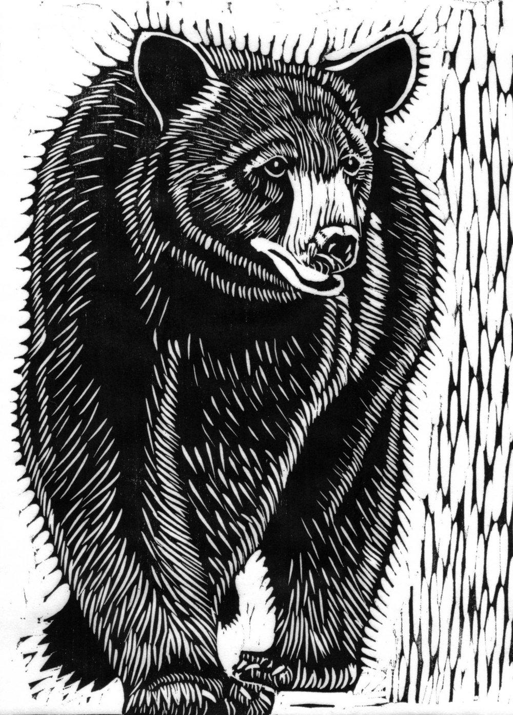 Black Bear Ambling
