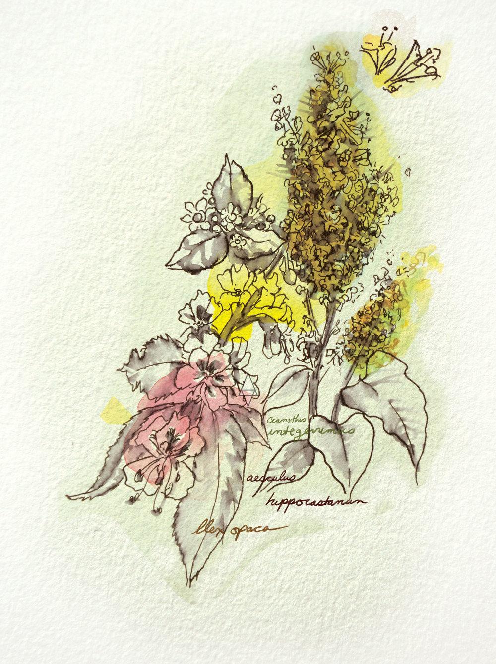 Illusrations by Rina Jakubowicz
