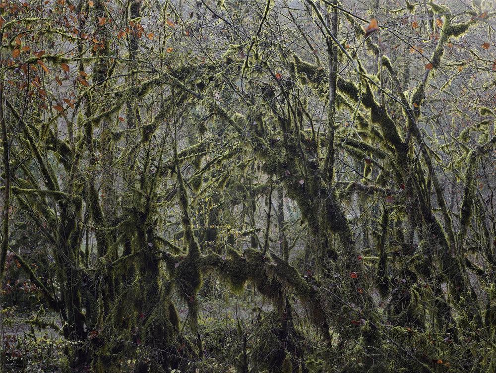 Forêt d'automne. D436, Route de la Faucille, Saint Claude.