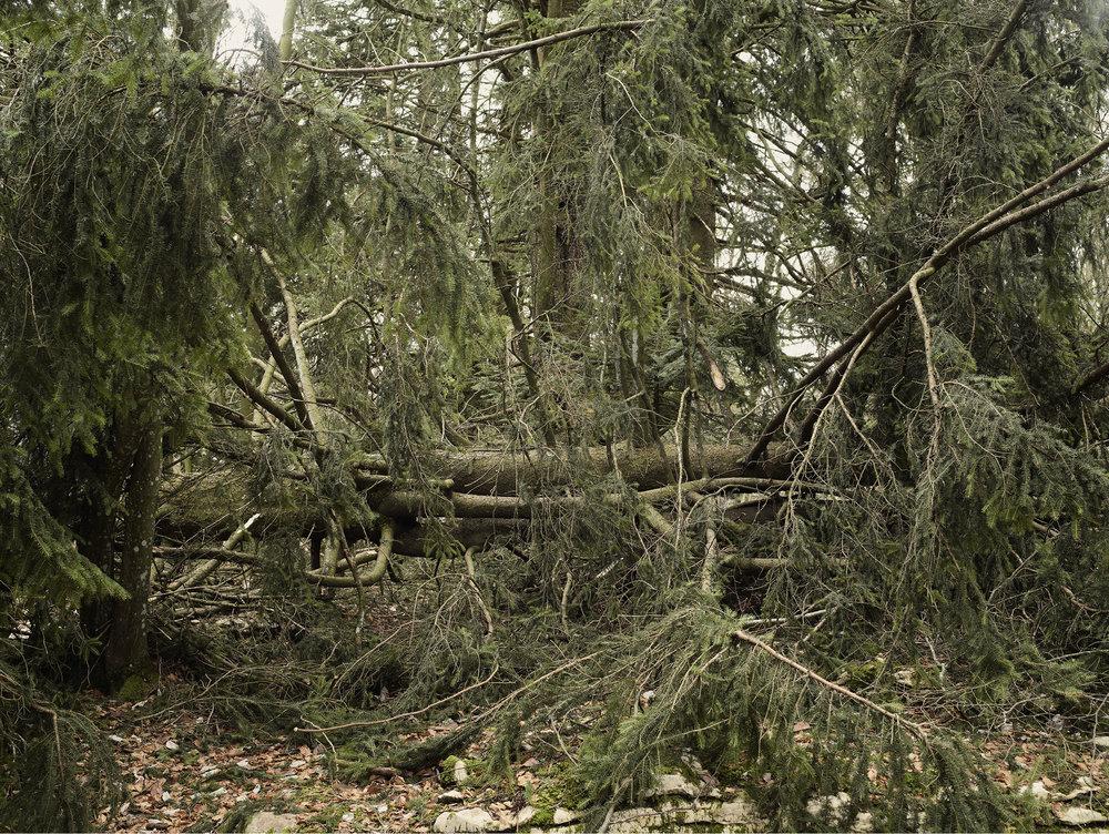 Forêt de printemps, col des pitons, D41A.