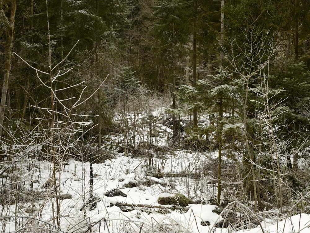 Forêt d'hivers. Lieu dit Les galcières, en direction du lac de Sylans.