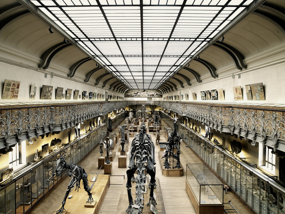Gallery of Dinosaurs, Museum of natural history, France, 2007.