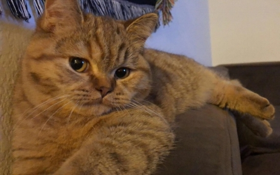 "Roxy aka Mew. She is a very funny cat. So much personality!"" ~ Nathan"
