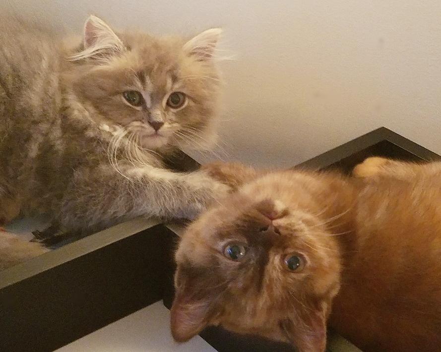 Blue Angel & Wanda - inseparable friends!