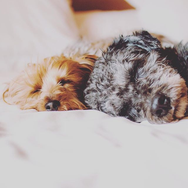 Sunday was made for sleeping in. We are always pet-friendly and never charge a fee for your fur babies to stay. #petfriendly #sunday #sleep #stay #relax #sundayfunday #weekend #instagood #hotel #boutiquehotel #arthotel #foundre #foundrephx #phoenix #downtown #arizona