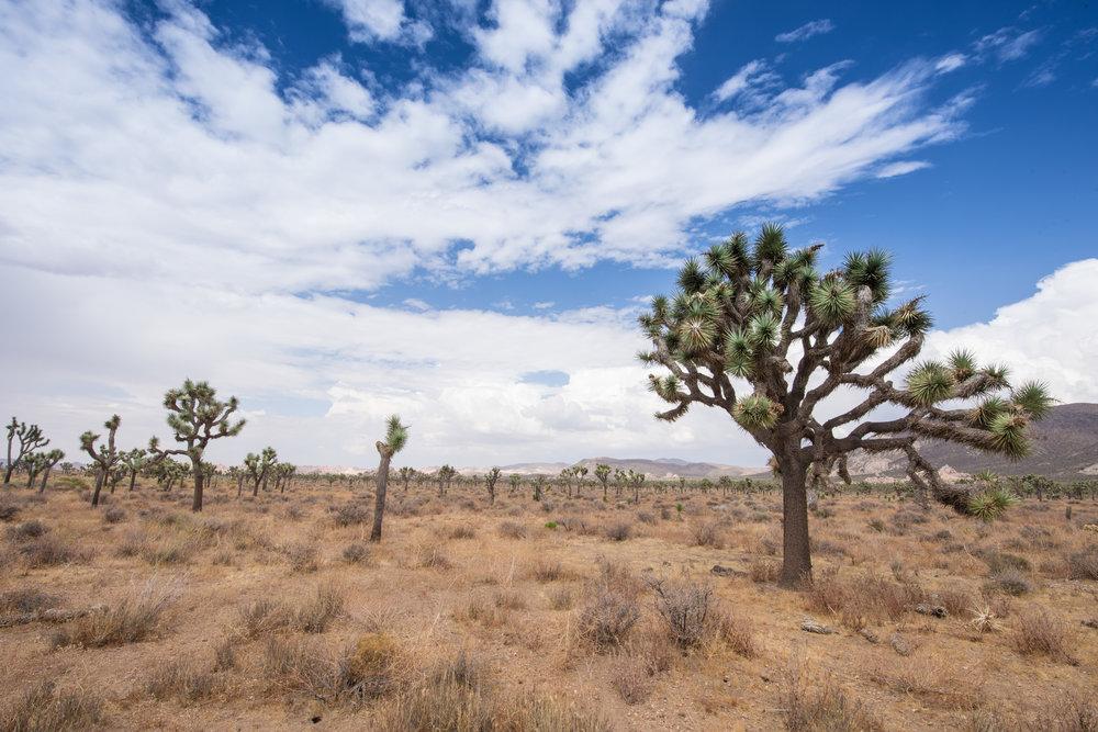 desert-4.jpg