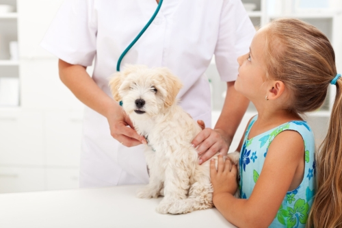 lomond-vets-specialist-pet-care-plan.jpg