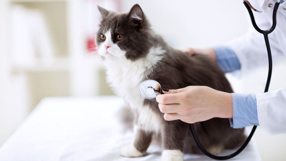 Lomond Vets Provide    Affordable Pet Care Plans    Learn More