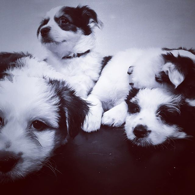We love puppies! These little ones were most relaxed about their visit :) #puppies #puppiesofinstagram #puppy