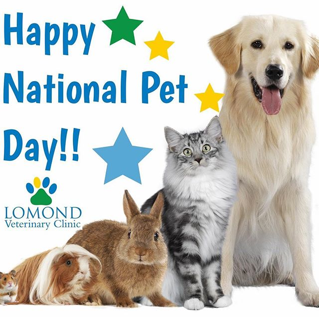Happy National Pet Day :) A great reason to spoil your pet even more than usual! #nationalpetday #welovepets